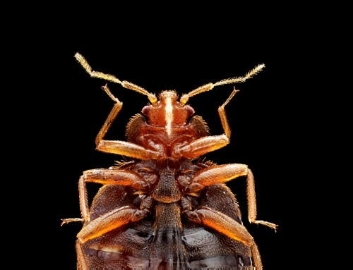 What To Do If You Suspect Bed Bugs After Traveling