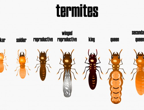 Wood Destroying Insects: Termites vs Carpenter Ants